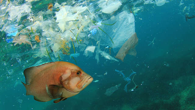 How the 5p carrier bag charge has helped to tackle plastic pollution